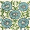 bedford-park-anenome