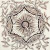 Unatributed-1890-c-PT050