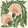 carnation-2 (1)